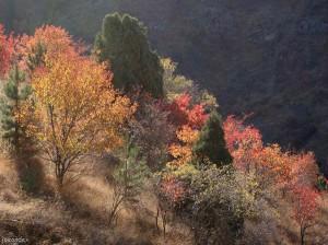sukok mountains